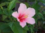 Flower_2007_26