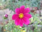 Flower_2007_30