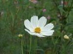Flower_2007_33