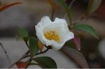 Flower_2008_04