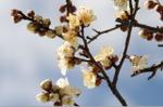 Flower_2008_05