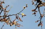 Flower_2008_06