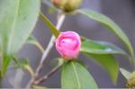 Flower_2008_07