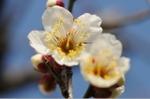 Flower_2008_08