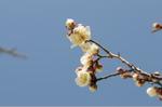 Flower_2008_09