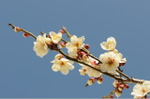 Flower_2008_12