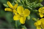 Flower_2008_15