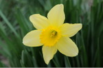 Flower_2008_16