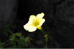 Flower_2008_17