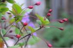Flower_2008_23