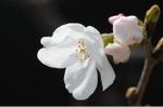 Flower_2008_25