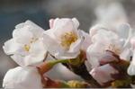 Flower_2008_26