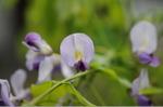 Flower_2008_33