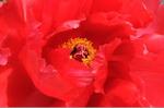 Flower_2008_38