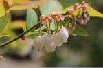 Flower_2008_39