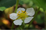 Flower_2008_40