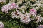 Flower_2008_41