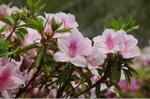 Flower_2008_42