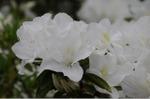 Flower_2008_43