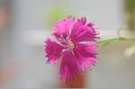 Flower_2008_48
