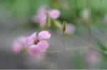 Flower_2008_49