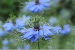 Flower_2008_50