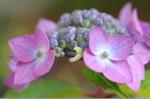 Flower_2008_51