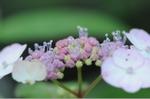 Flower_2008_52