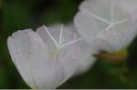 Flower_2008_53