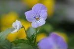 Flower_2008_54