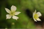 Flower_2008_56