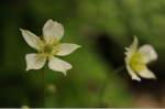 Flower_2008_57