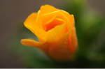 Flower_2008_58