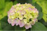 Flower_2008_59