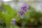 Flower_2008_60