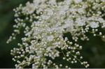 Flower_2008_61