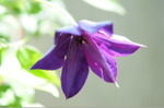 Flower_2008_64