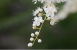 Flower_2008_65