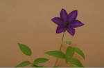 Flower_2008_66