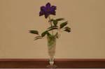 Flower_2008_67