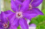 Flower_2008_68