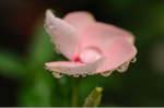 Flower_2008_69