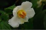 Flower_2008_70