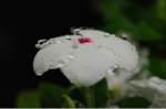 Flower_2008_71