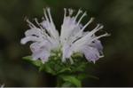 Flower_2008_72