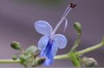 Flower_2008_74