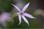 Flower_2008_75