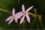 Flower_2008_76
