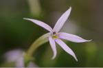 Flower_2008_77