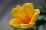 Flower_2008_82